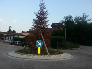 albero_piazzale_xxv_aprile_-_ceccano1